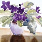 purple_cape_prime_rose50_1_20130806_1502713557